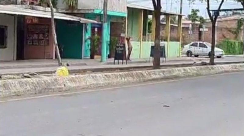 HOMBRE DESNUDO DEAMBULA POR LA CIUDAD